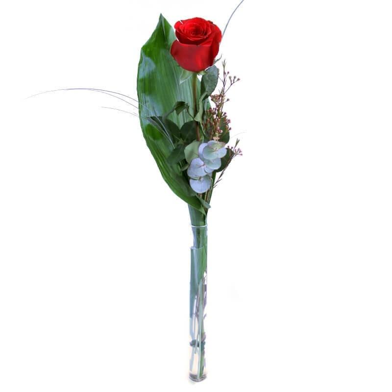 """Rosa """"Pensando en ti"""""""
