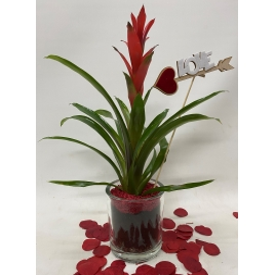Bromelia roja con decoración romántica