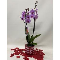 Orquidea con maceta ronántica